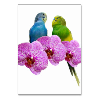 Budgie with Purple Orchid Card