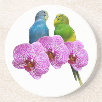 Budgie with Purple Orchid Coaster