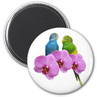Budgie with Purple Orchid Magnet
