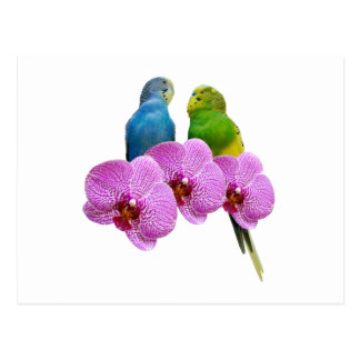 Budgie with Purple Orchid Postcard