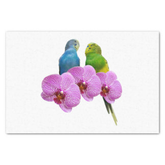 Budgie with Purple Orchid Tissue Paper