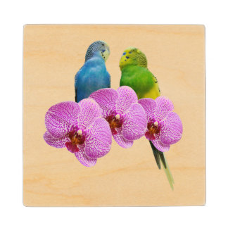 Budgie with Purple Orchid Wood Coaster