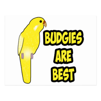 Budgies Are Best Postcard