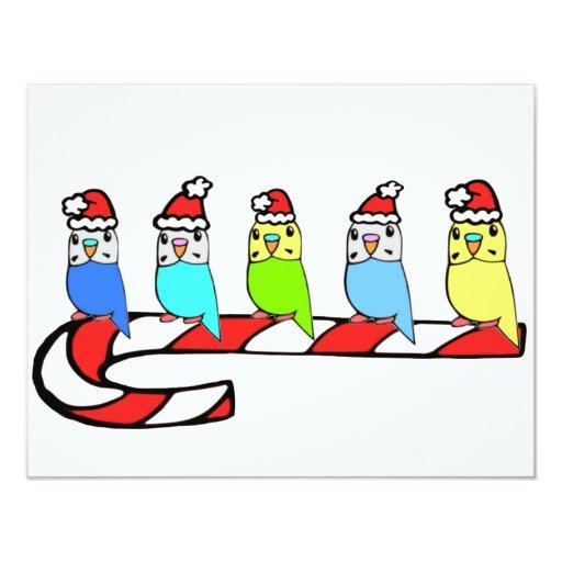 Budgies- Christmas 11 Cm X 14 Cm Invitation Card