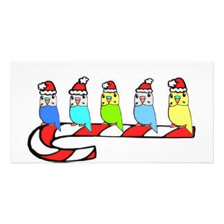 Budgies- Christmas Customized Photo Card