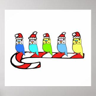 Budgies- Christmas Poster