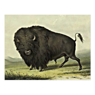 buffalo art postcard
