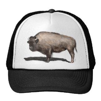 Buffalo, Bubalus Cap