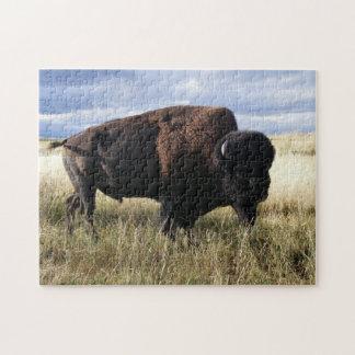 Buffalo Bull Jigsaw Puzzle