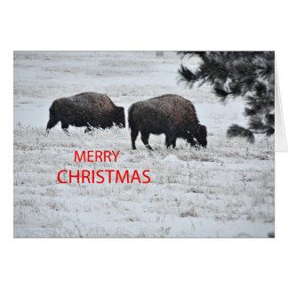 Buffalo Christmas Card