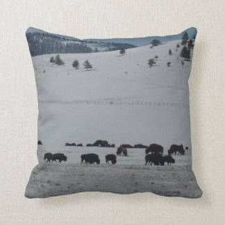 Buffalo grazing on snow covered mountain cushion