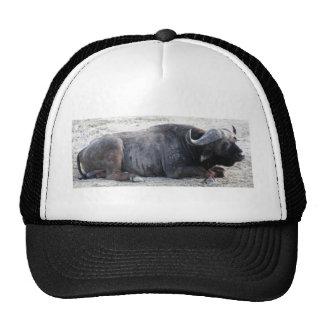 buffalo mesh hat