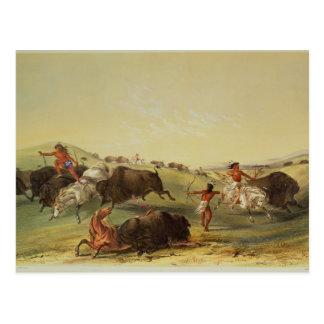 Buffalo Hunt Postcard
