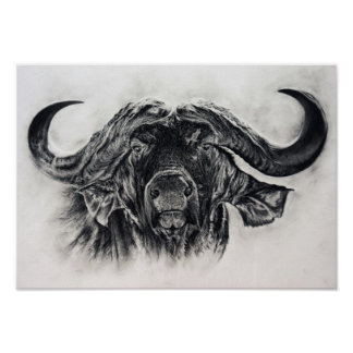 Buffalo in charcoal poster