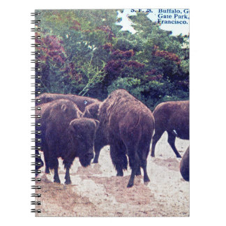 Buffalo in Golden Gate Park Vintage Postcard Notebooks