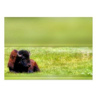 Buffalo Meadow Large Business Cards (Pack Of 100)