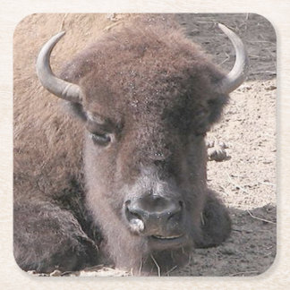Buffalo Photo Square Paper Coaster