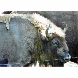 Buffalo Standing Photo Sculpture