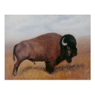 Buffalo Postcard