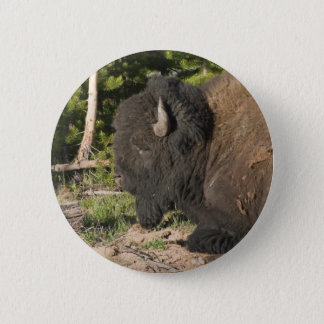 Buffalo Resting Button