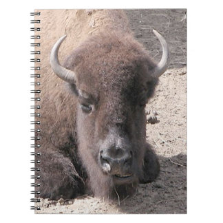 Buffalo Spiral Photo Notebook