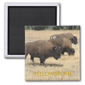 Buffalo Yellowstone Magnet
