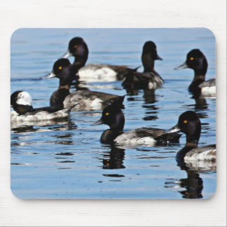 Bufflehead and greater scaup mouse pad