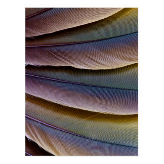 Buffon'S Macaw Feather Design Postcard