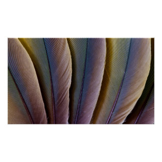 Buffon'S Macaw Feather Design Poster