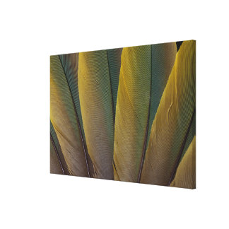 Buffon'S Macaw Feather Detail Canvas Print