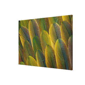 Buffon'S Macaw Feathers Canvas Print