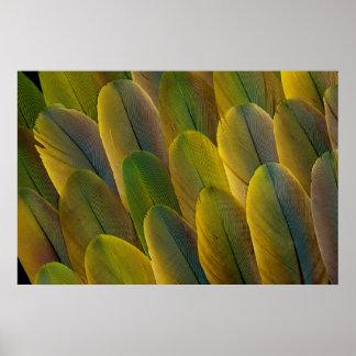 Buffon'S Macaw Feathers Poster
