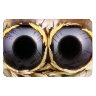 Bug Eyes Magnet 4x6