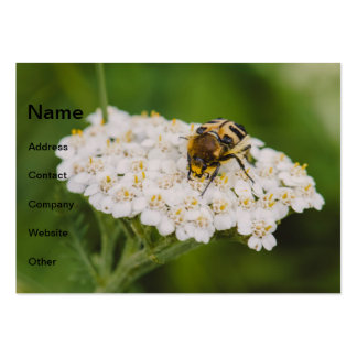 Bug on a white flower macro business card
