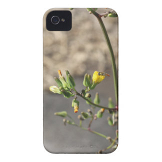 Bug on Flower iPhone 4 Case