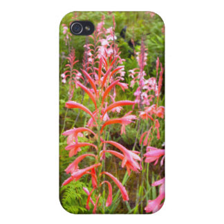 Bugle Lily (Watsonia) Flower, Eastern Cape Cases For iPhone 4