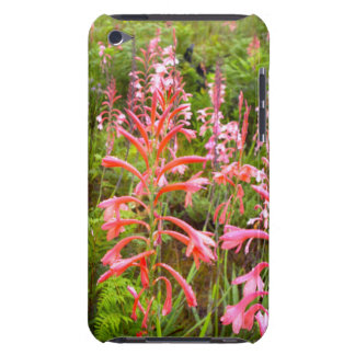 Bugle Lily (Watsonia) Flower, Eastern Cape iPod Touch Case