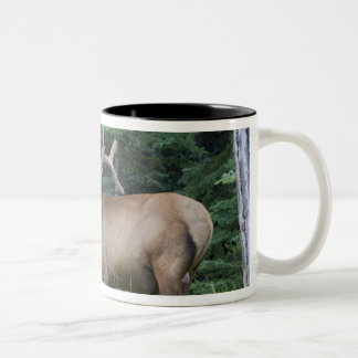 Bugling elk in Banff National Park, Canada. Two-Tone Mug