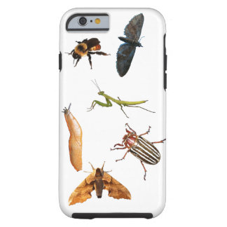 Bugs, and a Slug Tough iPhone 6 Case