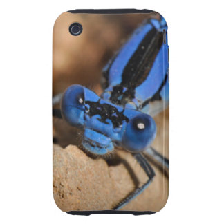 Bugs Tough iPhone 3 Cover