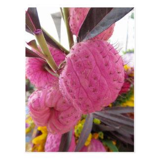 Bulbous Pink Flower Postcard