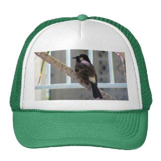 Bulbul Bird Oahu Hawaii Mesh Hats