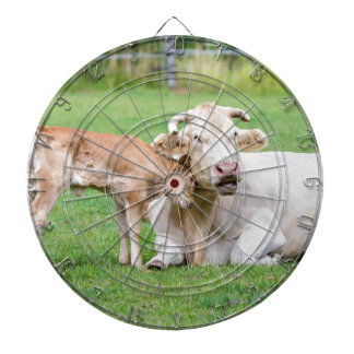 Bull calf loves mother cow in meadow dartboards