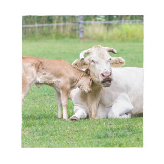 Bull calf loves mother cow in meadow notepads