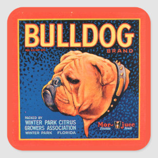 Bull Dog on a Blue Background Square Sticker