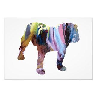 Bull dog photo print