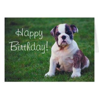 Bull Dog Puppy  Greeting card