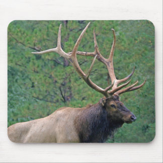 Bull elk and pines mouse pad