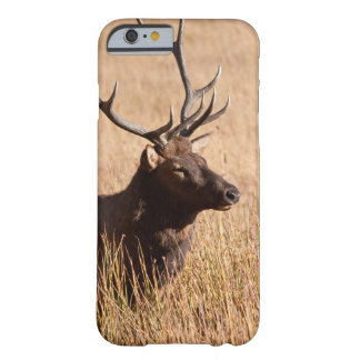 Bull Elk Barely There iPhone 6 Case