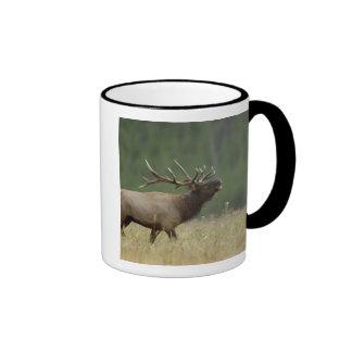 Bull Elk bugling, Yellowstone NP, Wyoming Ringer Mug